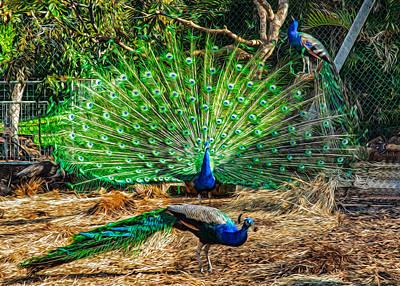 Peacocking Print by Omaste Witkowski