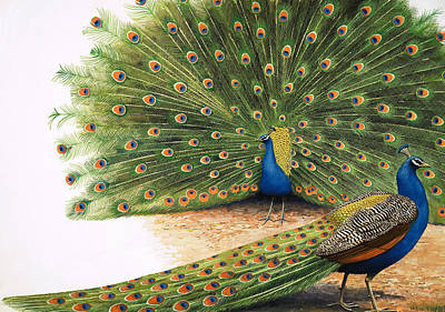 Peacock Painting - Peacocks by RB Davis