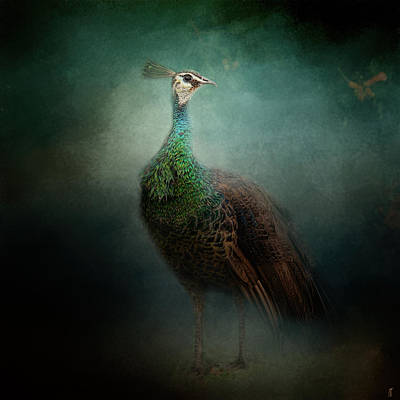 Peacock Photograph - Peafowl In The Garden - Wildlife by Jai Johnson