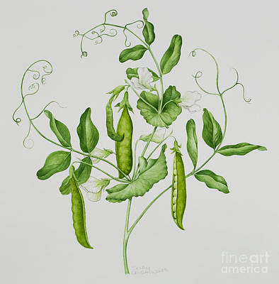 Vines Painting - Peas by Sally Crosthwaite