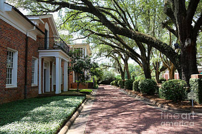 Georgia Plantation Photograph - Pebble Hill Plantation Walkway by Carol Groenen