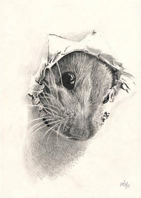 Peeckaboo Print by Bianca Ferrando