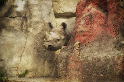 Peek A Boo Rhino Print by Thomas Woolworth
