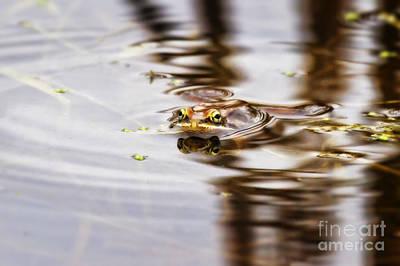 Spring Peepers Photograph - Peep by Jan Killian