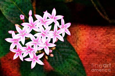 Flower Photograph - Pelargonium Graveolens II by Floyd Menezes
