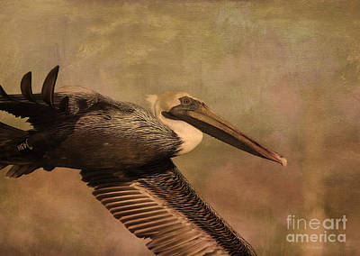 Pelican Mixed Media - Pelican 43h by Deborah Benoit