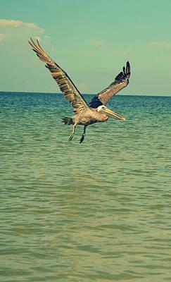 At Poster Digital Art - Pelican Gliding by Patricia Awapara