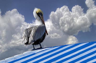 Pelican In The Clouds Print by Debra and Dave Vanderlaan