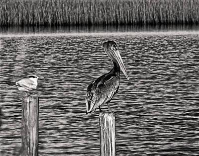Pelican Digital Art - Pelican Inland by Chris Flees