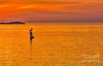 Water Bird Photograph - Pelican On A Buoy by Marvin Spates
