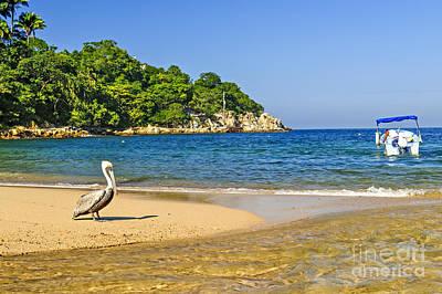 Puerto Vallarta Photograph - Pelican On Beach by Elena Elisseeva