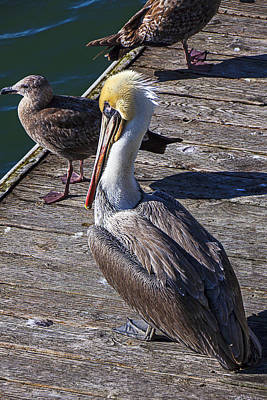 Pelican Photograph - Pelican On Dock by Garry Gay