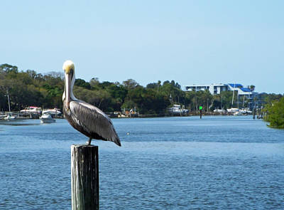 Pelican Photograph - Pelican Paradise by Aimee L Maher Photography and Art Visit ALMGallerydotcom