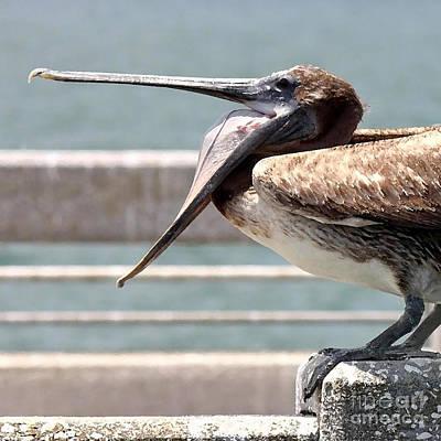 Pelican Yawn - Digital Painting Print by Carol Groenen