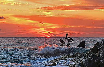 Fine Photograph - Pelicans At Cabo Sunrise by Marcia Colelli