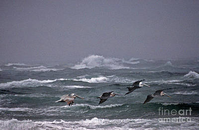 Of Birds Photograph - Pelicans In A Row by Skip Willits