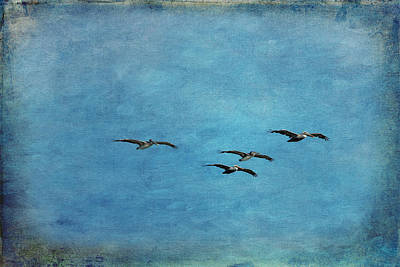 Manipulation Photograph - Pelicans In Flight by Mary Jo Allen