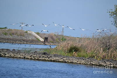 Pelicans Over Levee Print by Gero