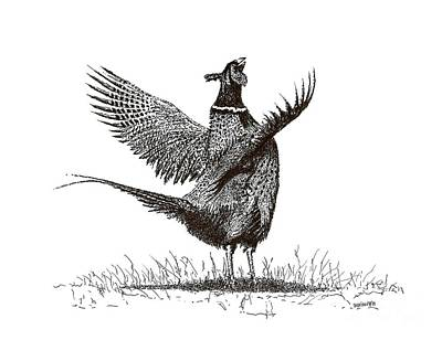 Pheasant Drawing - Pen And Ink Drawing Of Pheasant In Black And White by Mario Perez