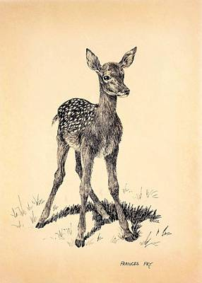 Pen And Ink On Card Of A Young Fallow Deer  Print by Frances Fry