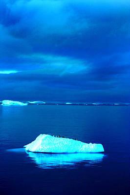 Photograph - Penguin On Iceberg by Amanda Stadther