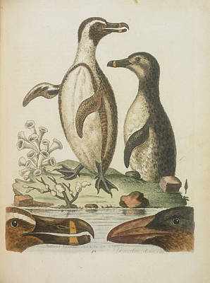 Categories Photograph - Penguins by British Library