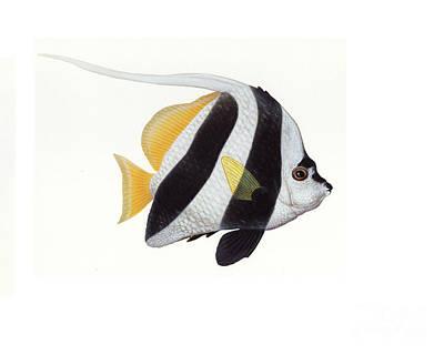 Pennant Coralfish Heniochus Acuminatus Print by Carlyn Iverson