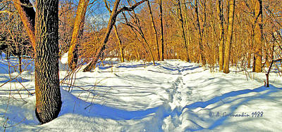 Print featuring the photograph Pennsylvania Forest In Winter by A Gurmankin