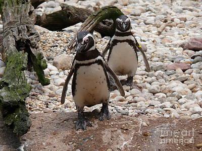 Penguin Digital Art - Penguins - Slow Walk - Digital Art by Anthony Morretta