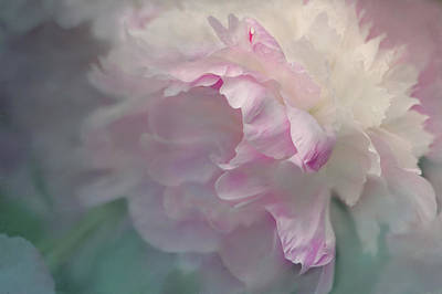Abstract Digital Photograph - Peony by Jeff Burgess