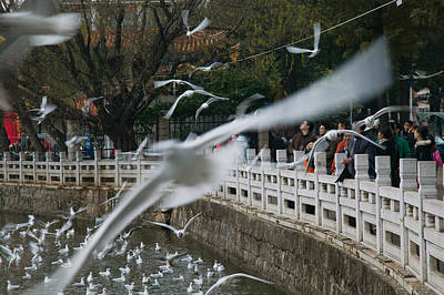 Flock Of Bird Photograph - People Feeding The Gulls In A Park by Panoramic Images