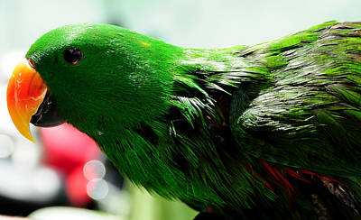 Yellow Beak Photograph - Peppi.green Parrot In His Glory by Jenny Rainbow