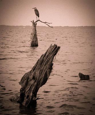Cypress Stump Photograph - Perch by Christy Usilton