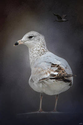 Larus Delawarensis Photograph - Perched Nearby by Jai Johnson