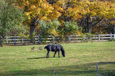 Uconn Photograph - Percheron On An Autumn Day by Donna Doherty