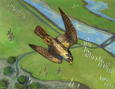 Peregrine Falcon Original by ACE Coinage painting by Michael Rothman