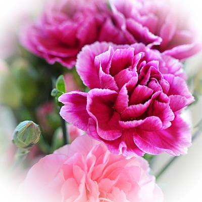 Pink Carnation Photograph - Perfectly Pink by Sharon Lisa Clarke