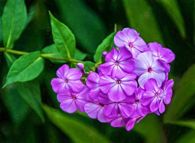 Perky Purple Phlox - Paint Print by Steve Harrington