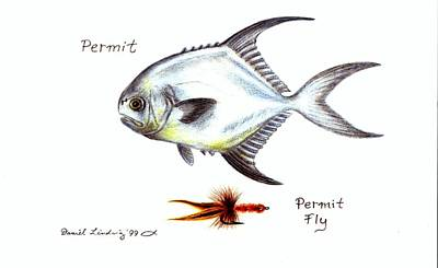 Permit And Permit Fly Print by Daniel Lindvig