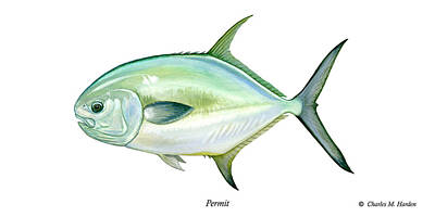 Permit Print by Charles Harden
