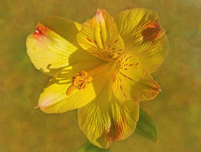 Peruvian Lily Print by Sandi OReilly