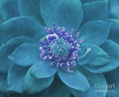 To Heal Photograph - Petal Mandala In Turquoise by Irina Wardas