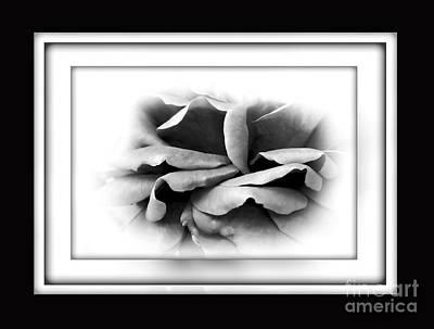 Petals And Shadows 2 Print by Kaye Menner