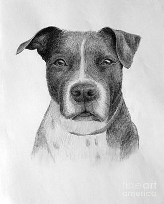 Animal Shelter Drawing - Petey by Denise M Cassano