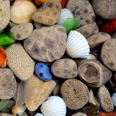 Fossil Photograph - Petoskey Stones V by Michelle Calkins