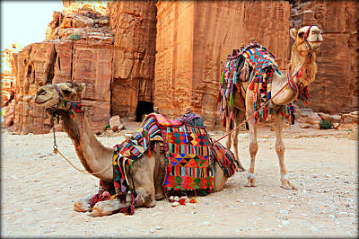 Petra Camels Print by Stephen Stookey
