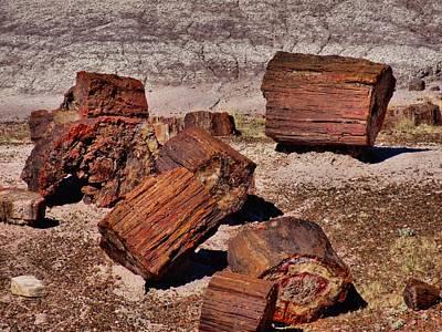 Petrified Forest Arizona Photograph - Petrified Wood by Dan Sproul