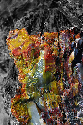 Crystals Photograph - Petrified Wood Macro At Petrified Forest National Park Color Splash Black And White by Shawn O'Brien