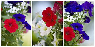 Digital Art - Petunia Flowers Triptych Art by Christina Rollo