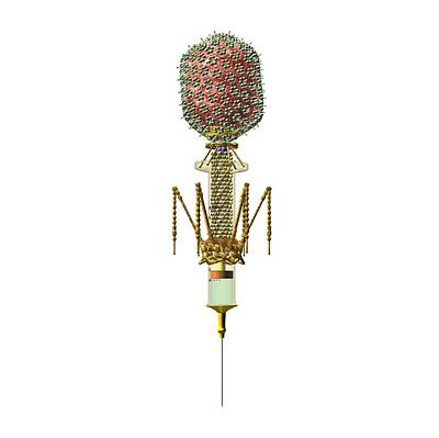Phage Therapy Syringe Print by Russell Kightley